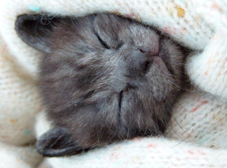 le chaton il dort enfin p 39 tites racailles. Black Bedroom Furniture Sets. Home Design Ideas